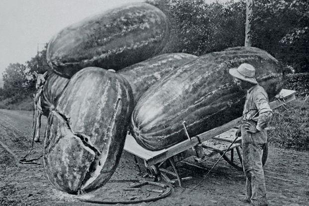damaged fruit