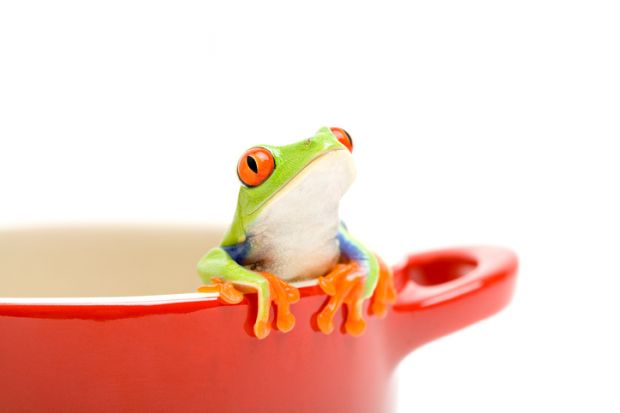 A frog looking out of a saucepan