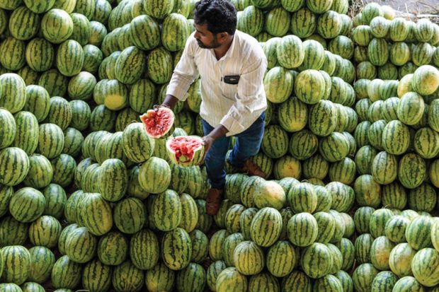 Farmer splits open a watermelon in a fruit market as a metaphor for time for a home-grown English language test, Indian agents